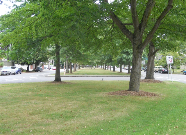 Ravenna Boulevard, part of Seattle's Olmstead boulevard system.